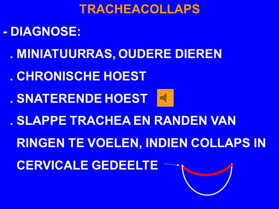 TRACHEACOLLAPS - DIAGNOSE: . MINIATUURRAS, OUDERE DIEREN. . CHRONISCHE HOEST. . SNATERENDE HOEST.