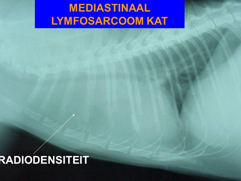 MEDIASTINAAL LYMFOSARCOOM KAT