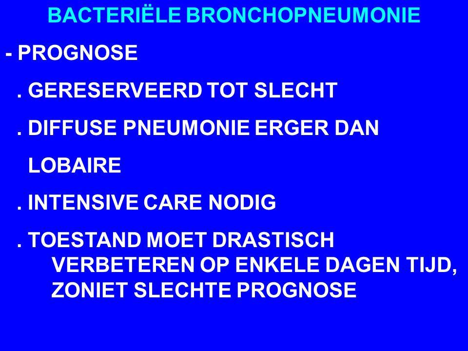 BACTERIËLE BRONCHOPNEUMONIE