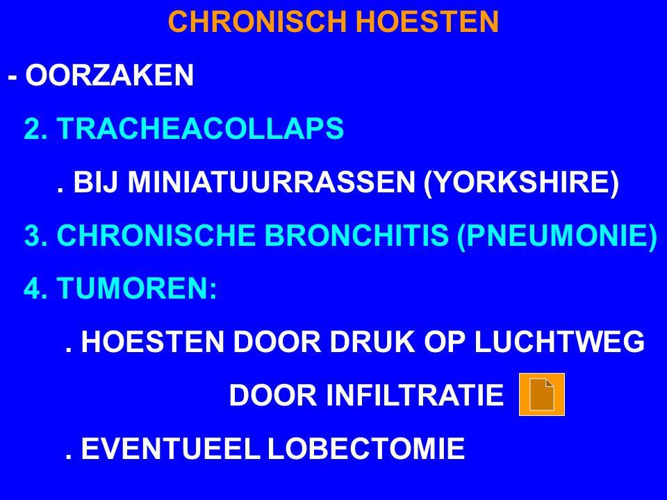 CHRONISCH HOESTEN - OORZAKEN. 2. TRACHEACOLLAPS. . BIJ MINIATUURRASSEN (YORKSHIRE) 3. CHRONISCHE BRONCHITIS (PNEUMONIE)