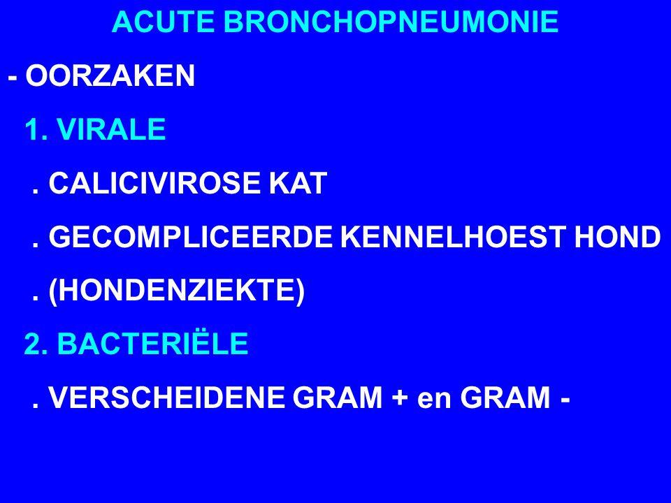 ACUTE BRONCHOPNEUMONIE