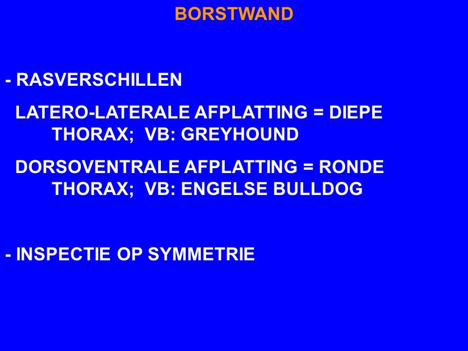 BORSTWAND - RASVERSCHILLEN. LATERO-LATERALE AFPLATTING = DIEPE THORAX; VB: GREYHOUND.
