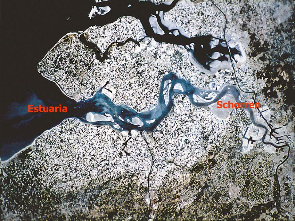 Schorren Estuaria