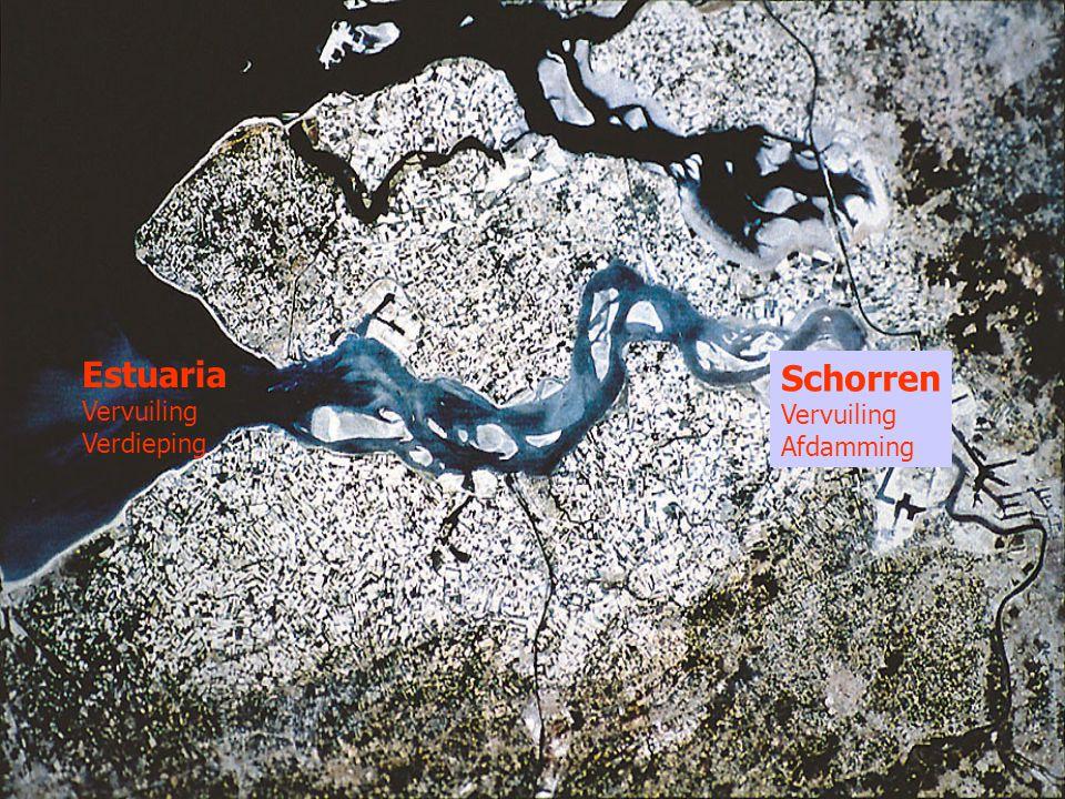 Estuaria Vervuiling Verdieping Schorren Vervuiling Afdamming
