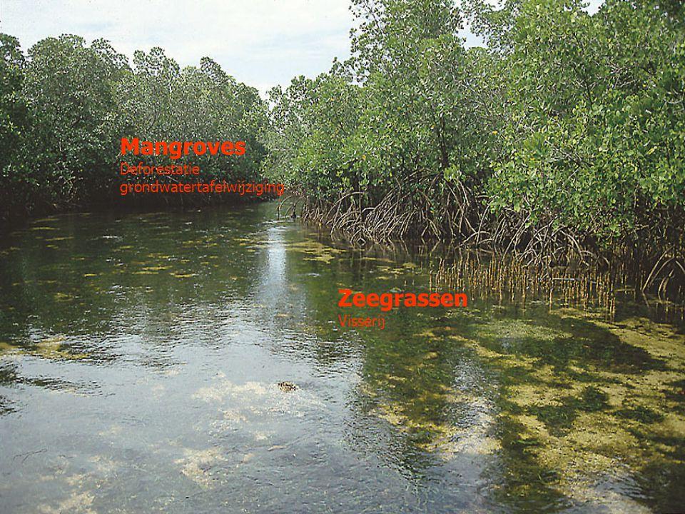 Mangroves Deforestatie grondwatertafelwijziging Zeegrassen Visserij