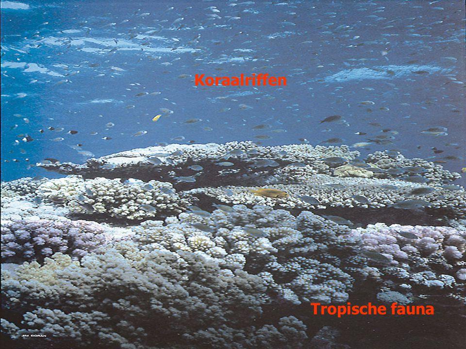 Koraalriffen Tropische fauna