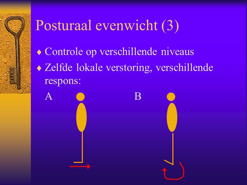 Posturaal evenwicht (3)