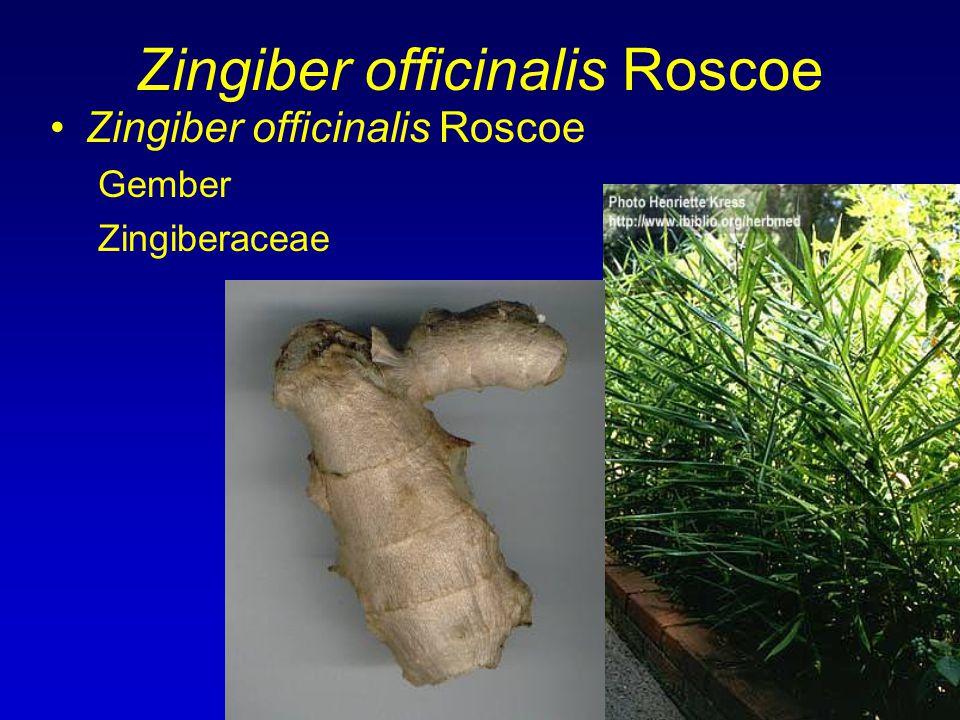 Zingiber officinalis Roscoe