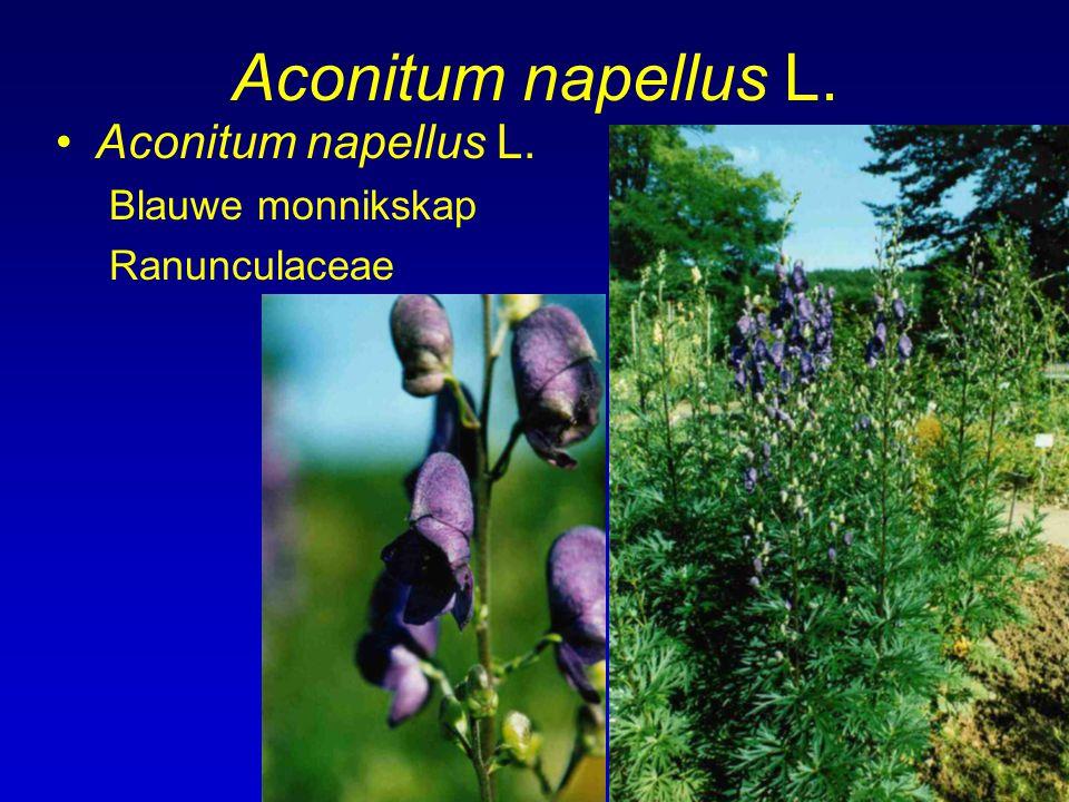 Aconitum napellus L. Aconitum napellus L. Blauwe monnikskap