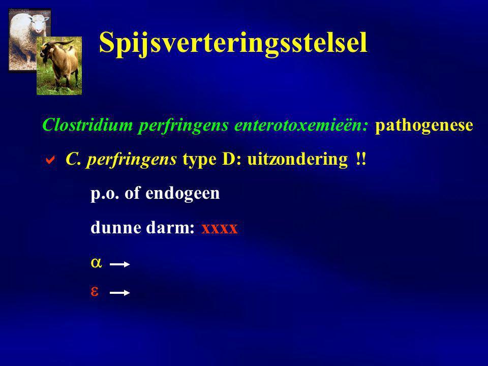 Spijsverteringsstelsel