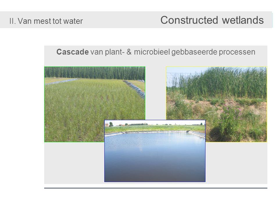 II. Van mest tot water Constructed wetlands