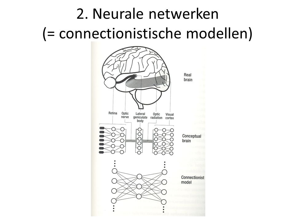 2. Neurale netwerken (= connectionistische modellen)
