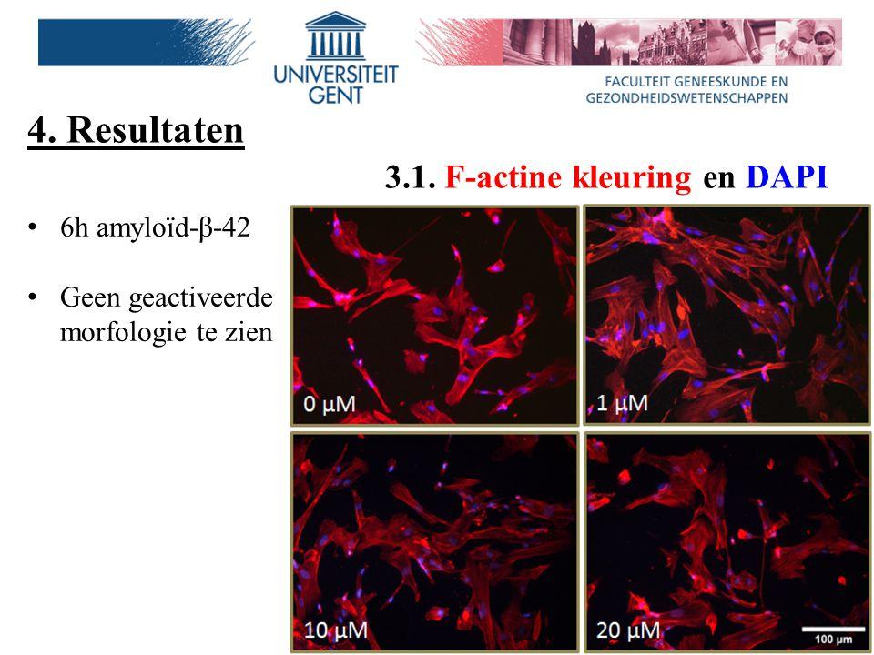 4. Resultaten 3.1. F-actine kleuring en DAPI 6h amyloïd-β-42