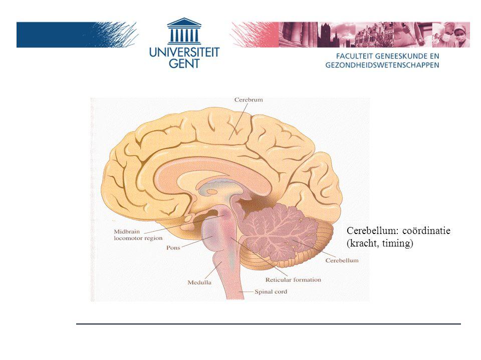 Cerebellum: coördinatie