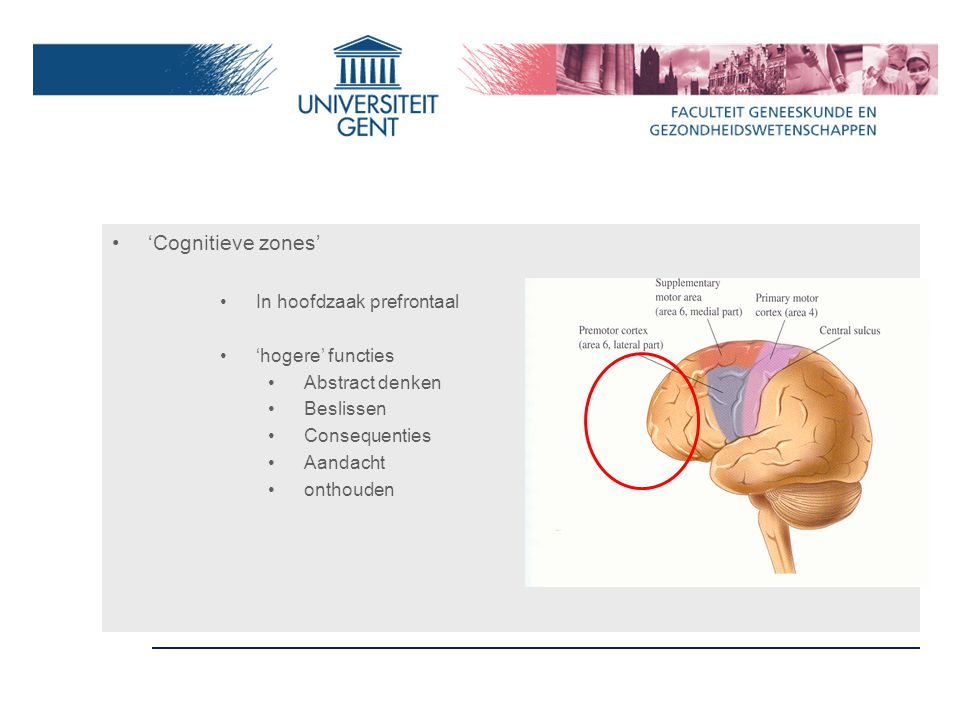'Cognitieve zones' In hoofdzaak prefrontaal 'hogere' functies