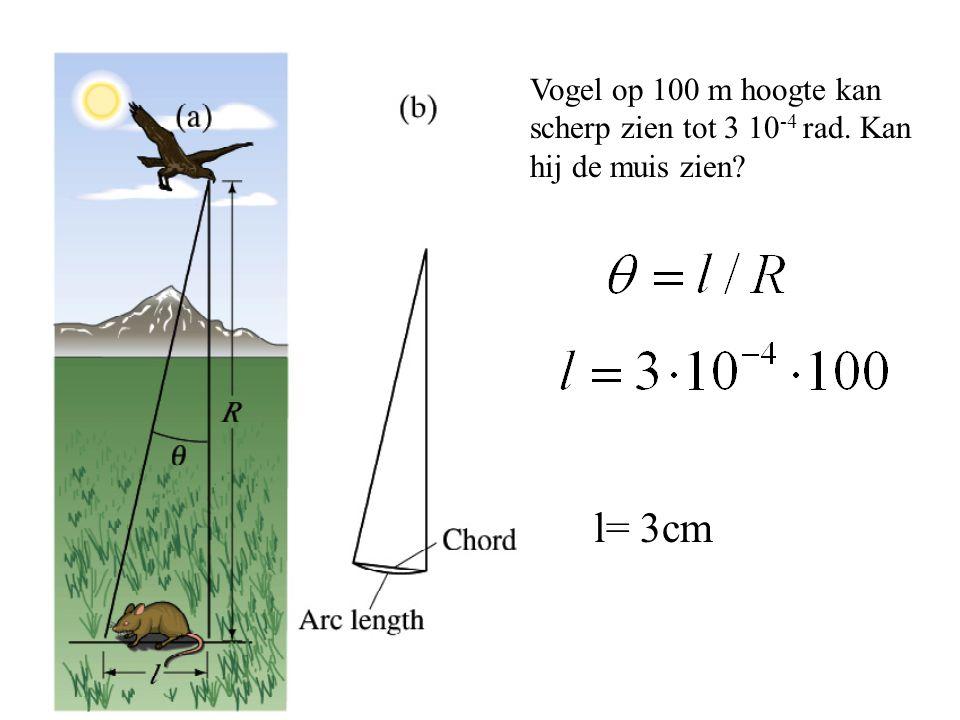 Vogel op 100 m hoogte kan scherp zien tot 3 10-4 rad
