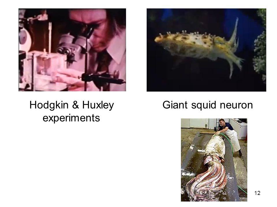 Hodgkin & Huxley experiments