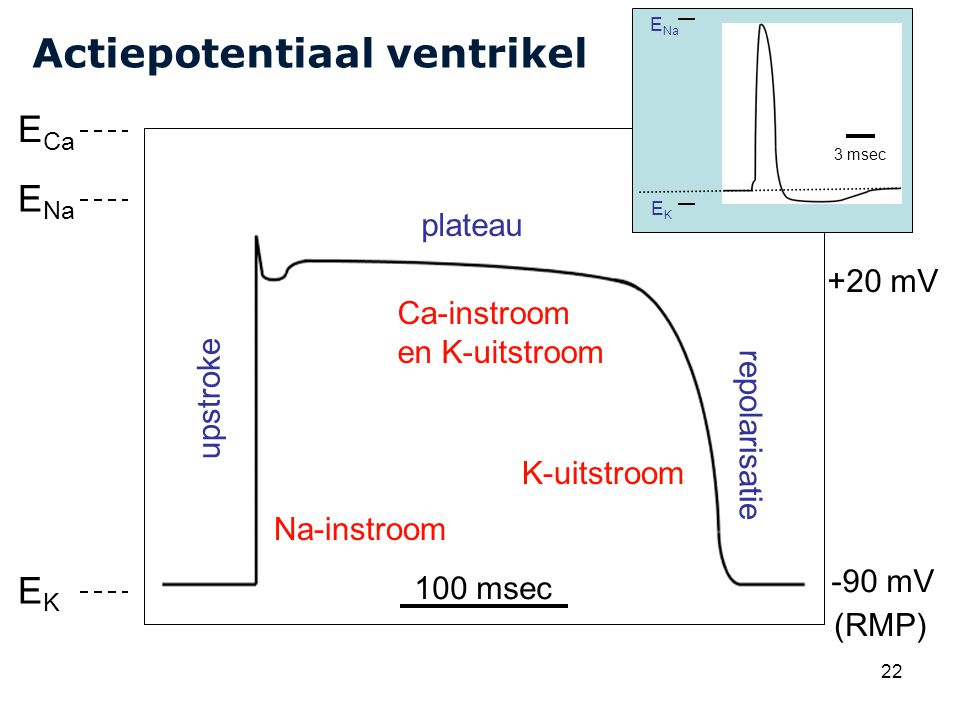 Actiepotentiaal ventrikel
