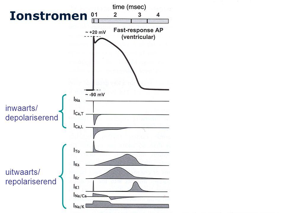 Ionstromen inwaarts/ depolariserend uitwaarts/ repolariserend