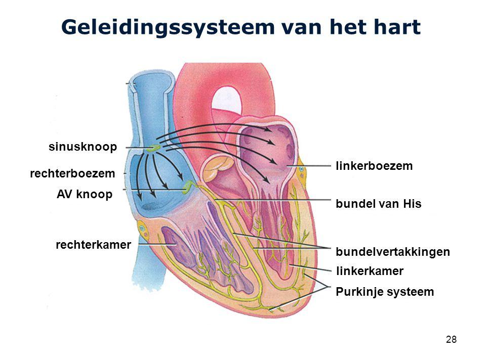 Geleidingssysteem van het hart