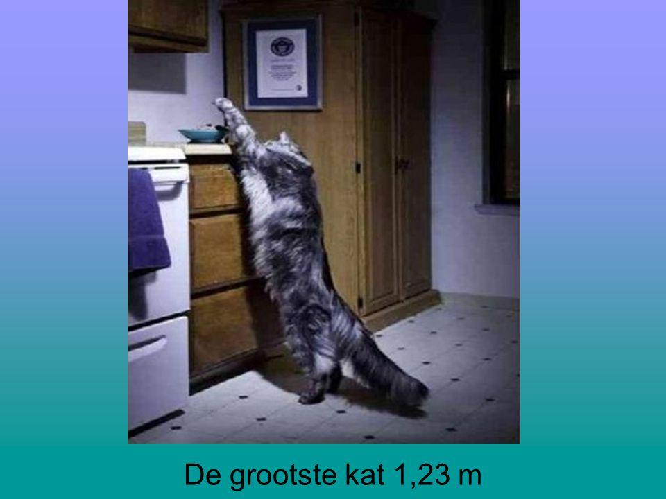 De grootste kat 1,23 m