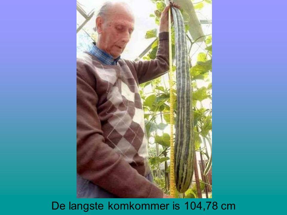 De langste komkommer is 104,78 cm