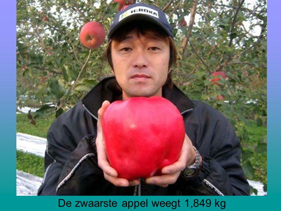 De zwaarste appel weegt 1,849 kg