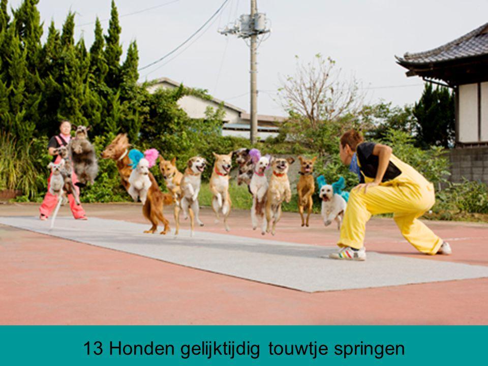 13 Honden gelijktijdig touwtje springen