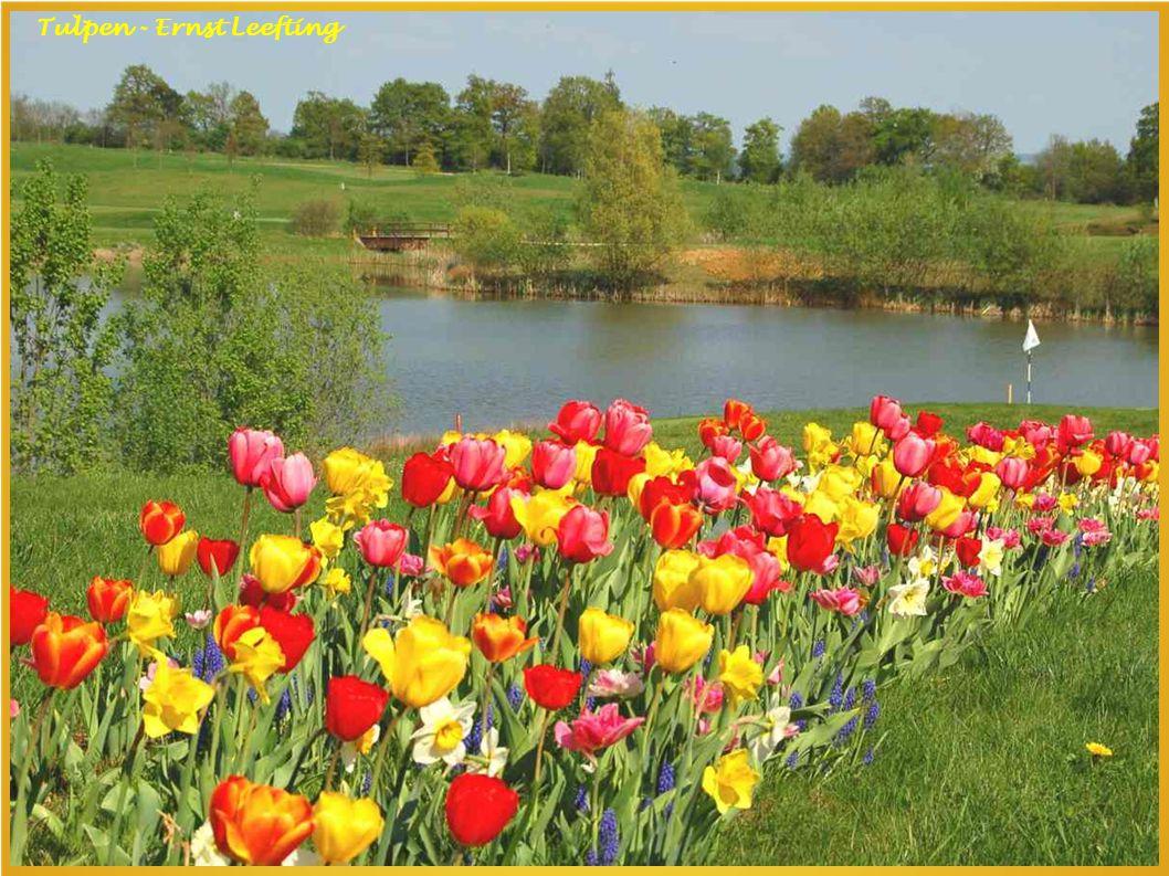 Tulpen - Ernst Leefting