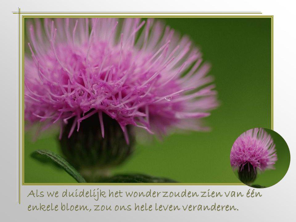 Als we duidelijk het wonder zouden zien van één enkele bloem, zou ons hele leven veranderen.