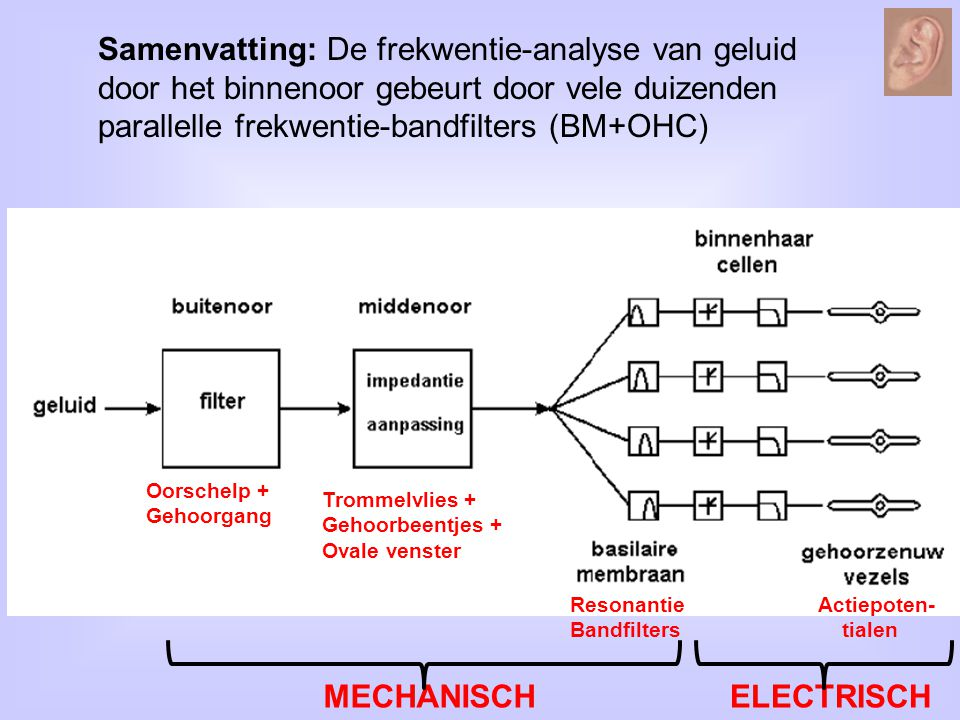 Samenvatting: De frekwentie-analyse van geluid