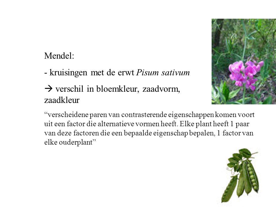 - kruisingen met de erwt Pisum sativum