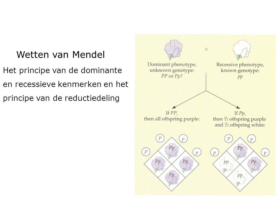 Wetten van Mendel Het principe van de dominante