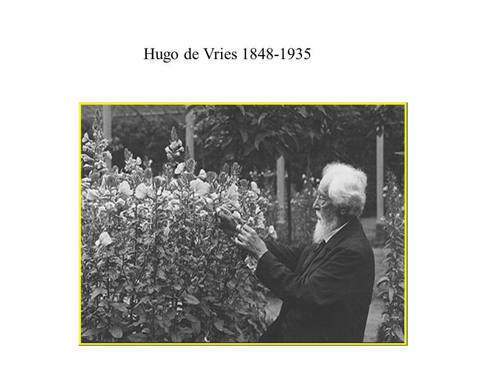 Hugo de Vries 1848-1935