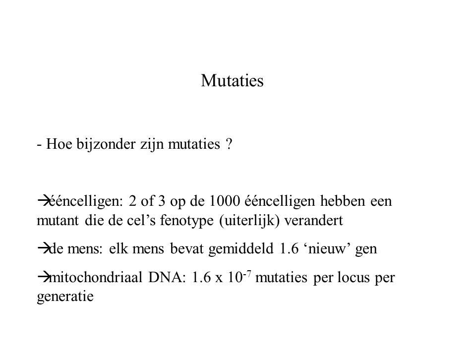 Mutaties Hoe bijzonder zijn mutaties