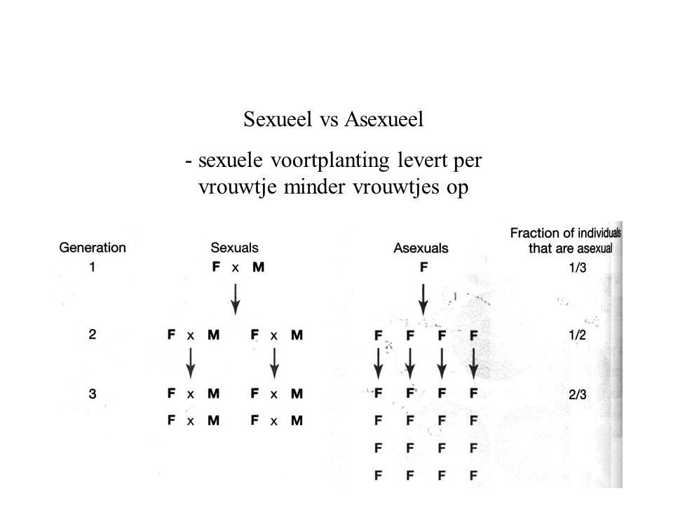- sexuele voortplanting levert per vrouwtje minder vrouwtjes op
