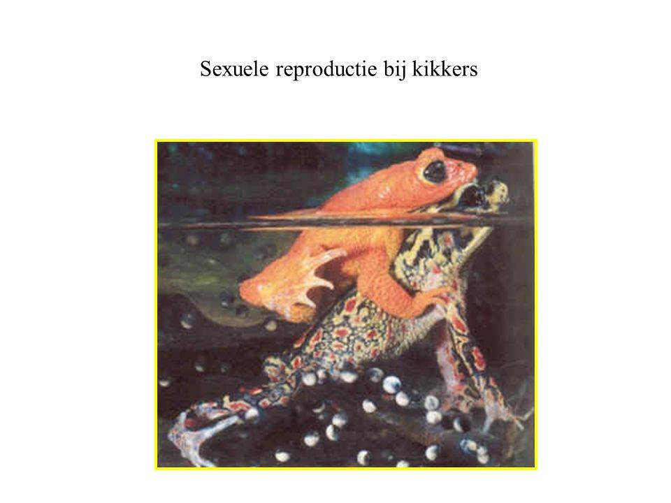 Sexuele reproductie bij kikkers