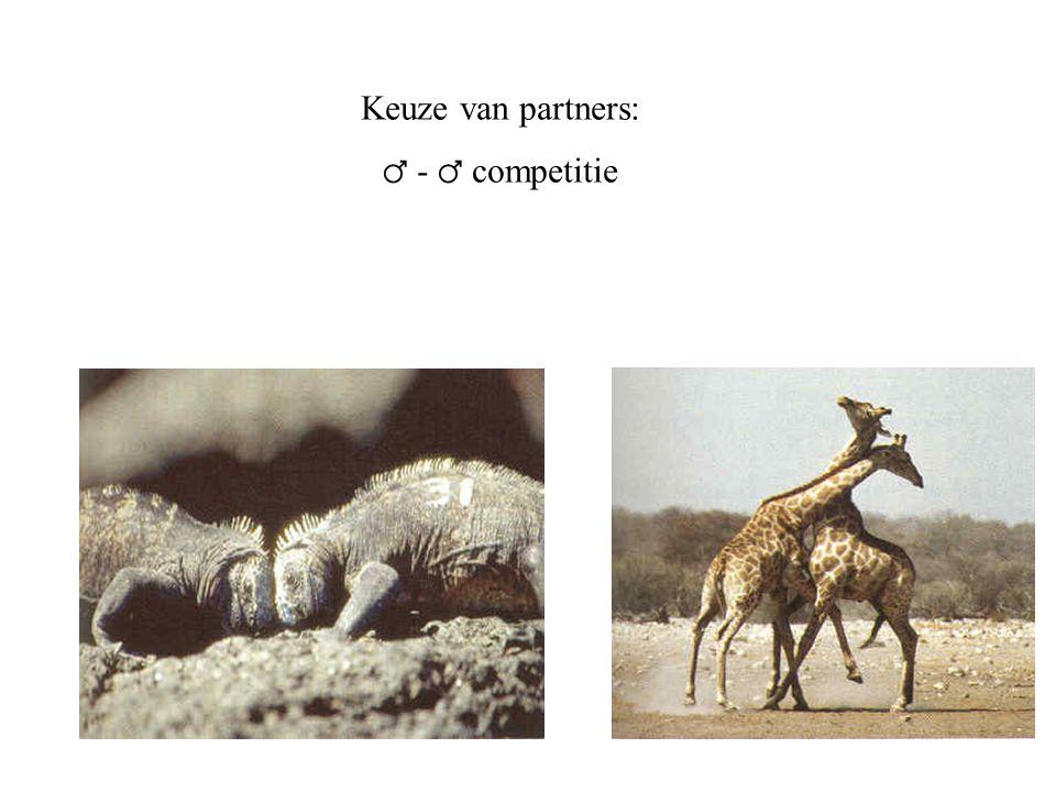 Keuze van partners: ♂ - ♂ competitie