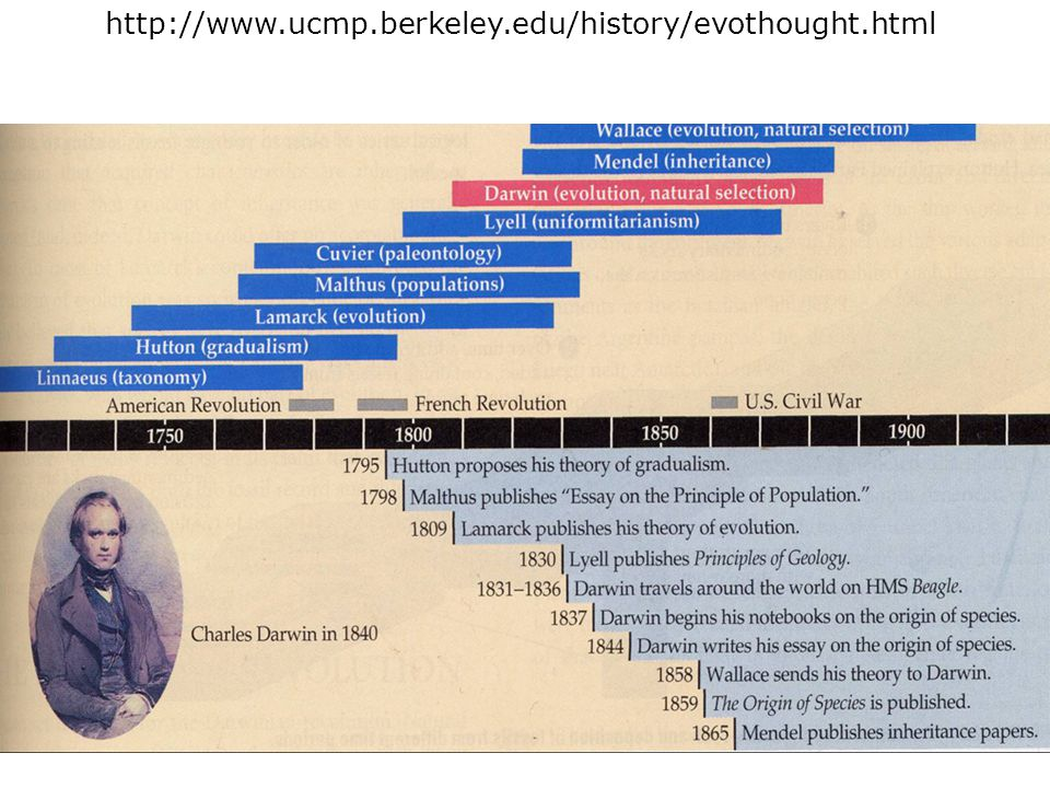 http://www.ucmp.berkeley.edu/history/evothought.html