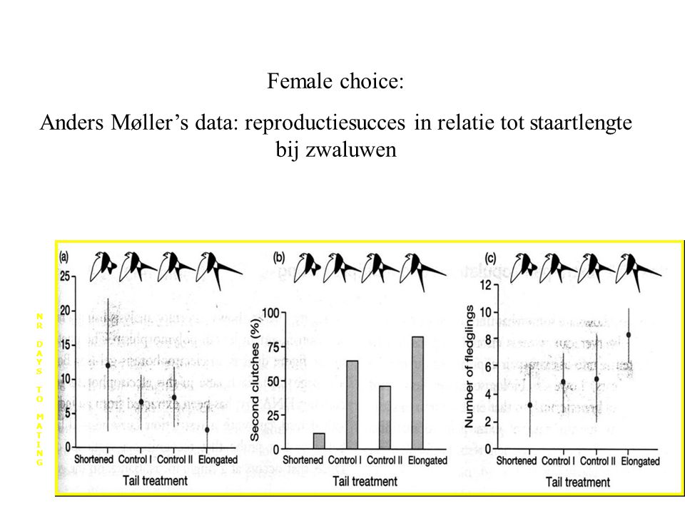 Female choice: Anders Møller's data: reproductiesucces in relatie tot staartlengte bij zwaluwen. N.