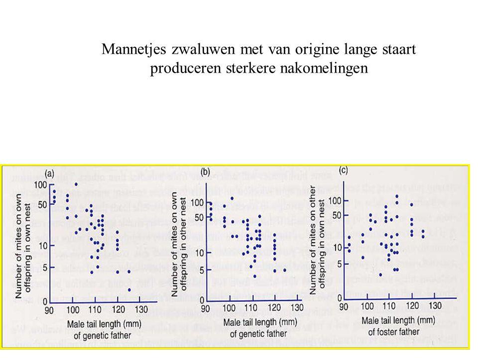 Mannetjes zwaluwen met van origine lange staart produceren sterkere nakomelingen
