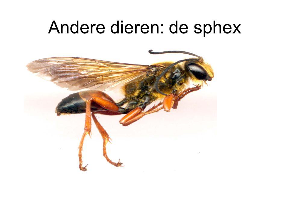 Andere dieren: de sphex