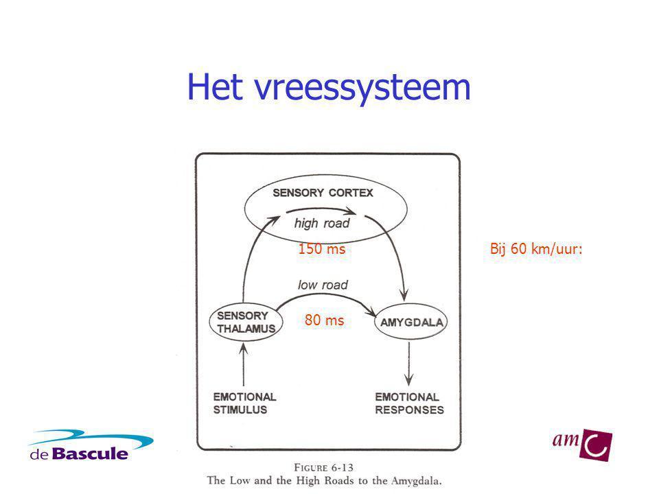 Het vreessysteem 150 ms Bij 60 km/uur: 80 ms