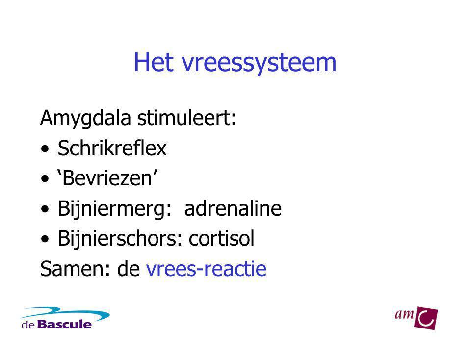Het vreessysteem Amygdala stimuleert: Schrikreflex 'Bevriezen'