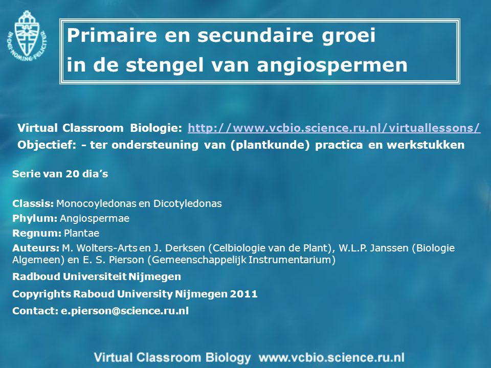 Primaire en secundaire groei in de stengel van angiospermen