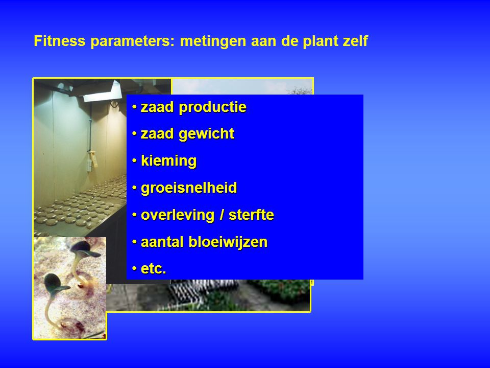 Fitness parameters: metingen aan de plant zelf