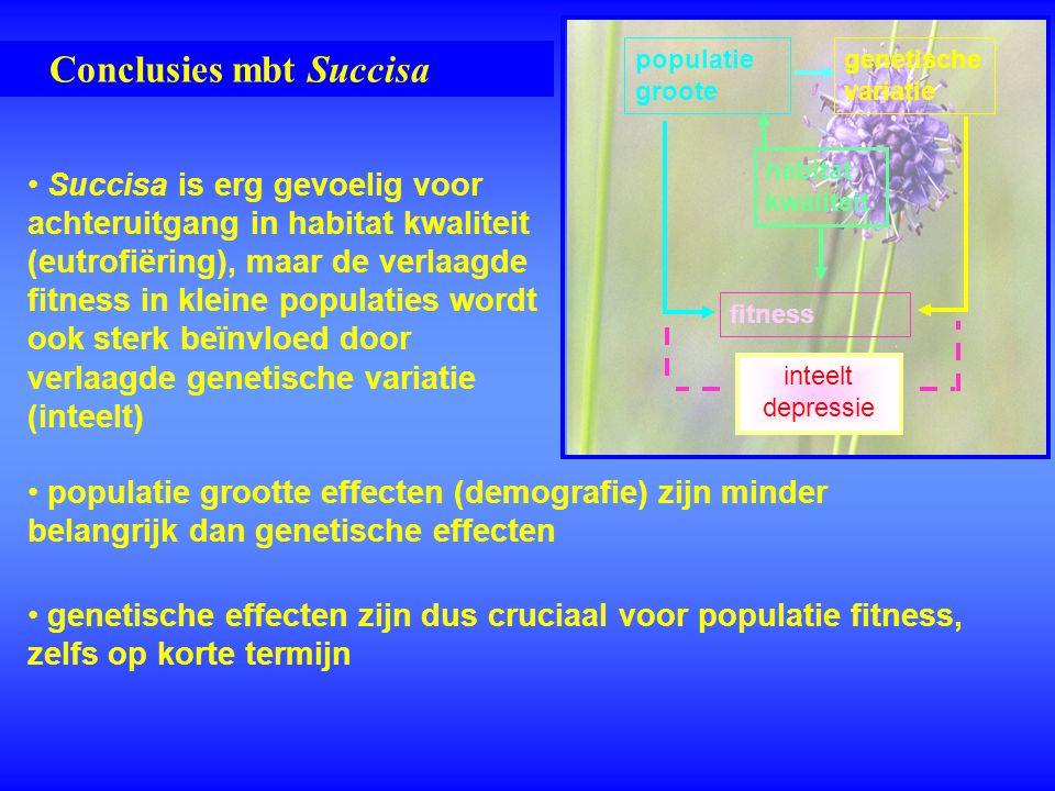 Conclusies mbt Succisa