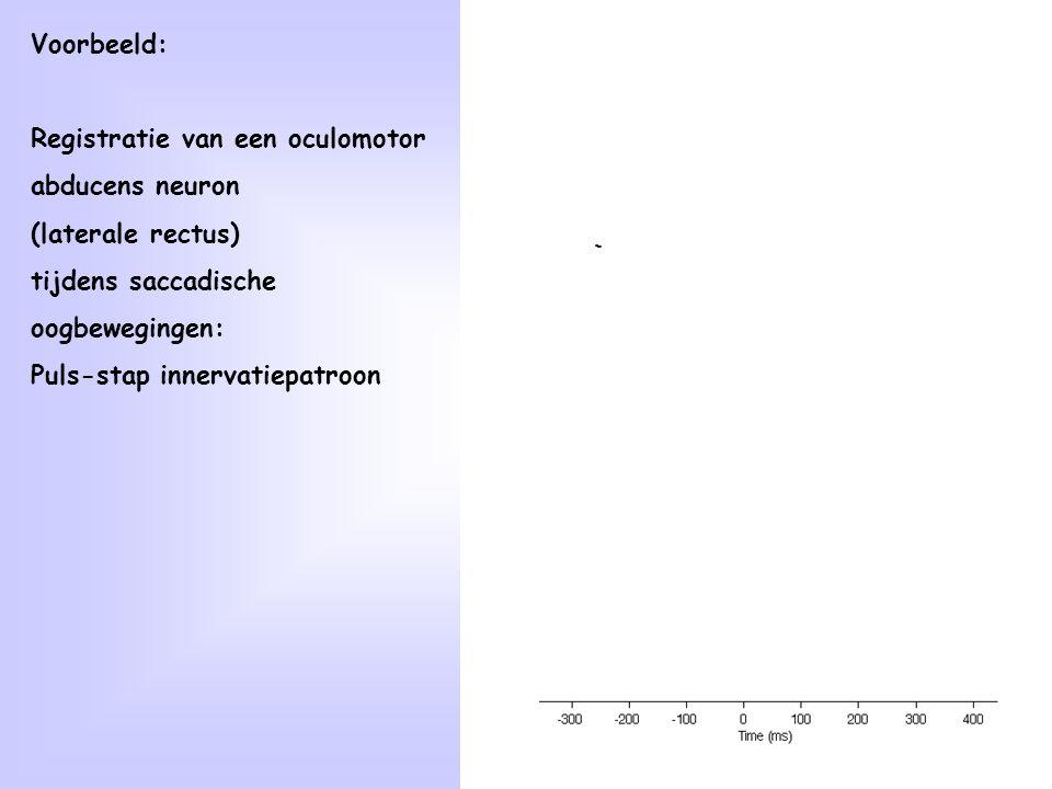 Voorbeeld: Registratie van een oculomotor. abducens neuron. (laterale rectus) tijdens saccadische.