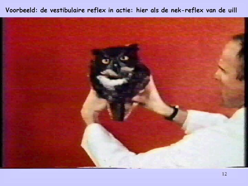 Voorbeeld: de vestibulaire reflex in actie: hier als de nek-reflex van de uill