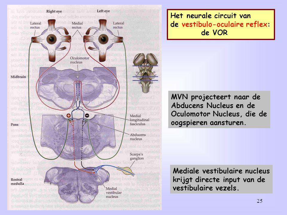 Het neurale circuit van